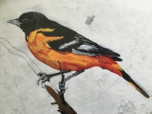 The Second Oriole