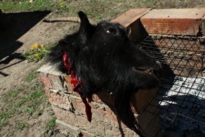 We Killed the Goat in Izbişte – Sundry Travels